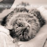 Astuce photo #2 – Mon chat en N&B, traité sur Lightroom