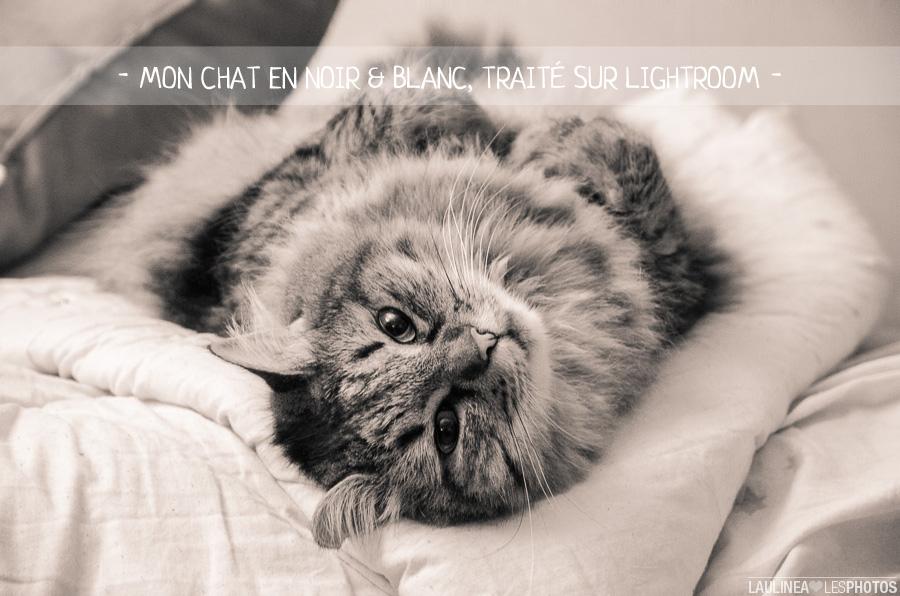 chat, angel, cat, animal, pet, photo, lightroom, retouche, traitement