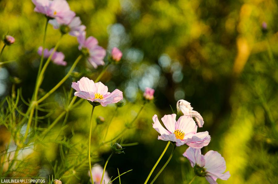 20130926-Jardin_Botanique-254