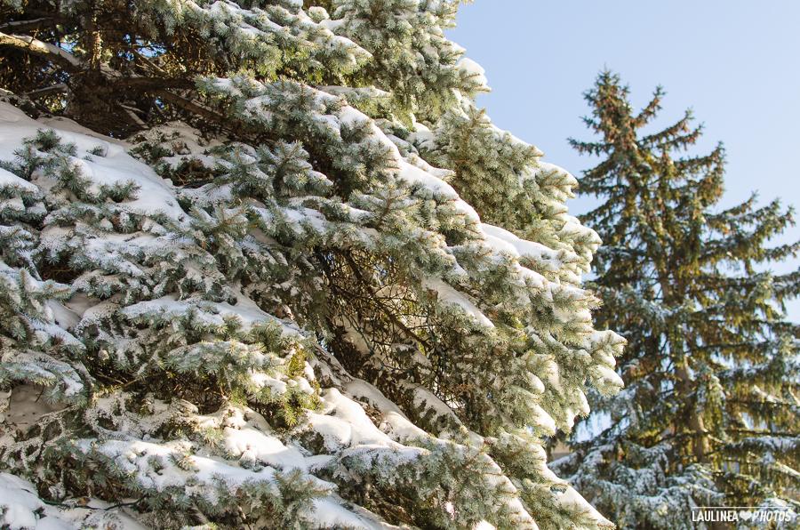 20131216-Tempete_de_neige-064