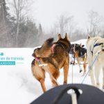 Touriste au Canada : la balade en chien de traineau