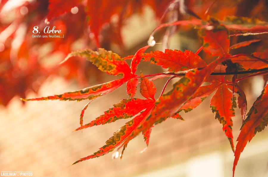 ten on ten - montréal, rue, ruelle, novembre, nature, feuille, rouge, érable, arbre