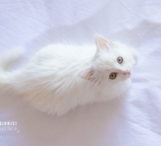 cat lover, white cat, chat blanc