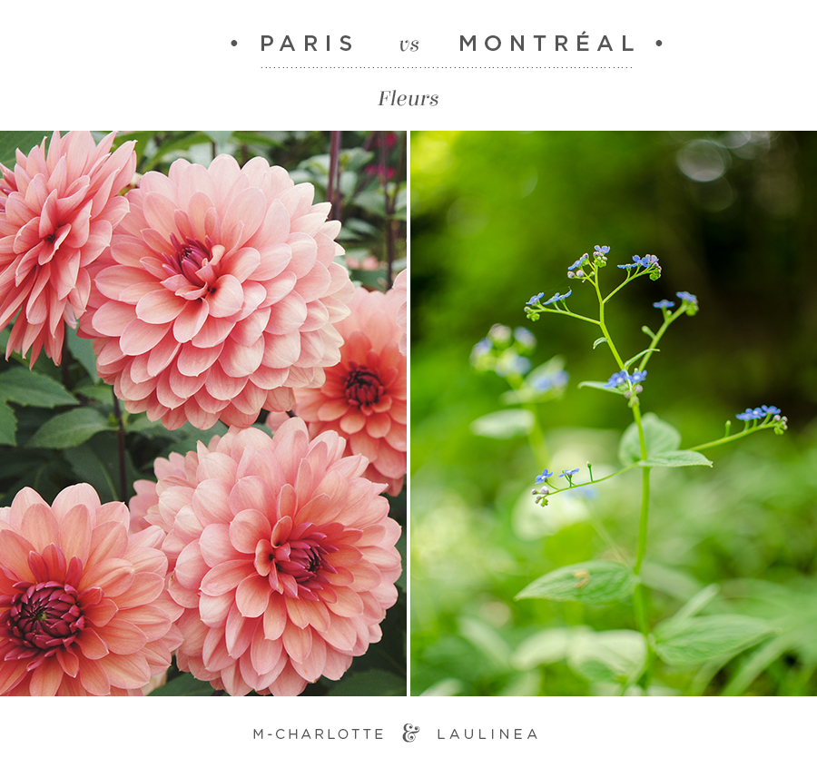 parisVSmontreal-fleurs