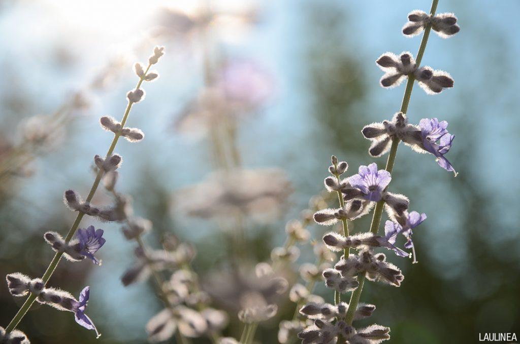 fleur, flower