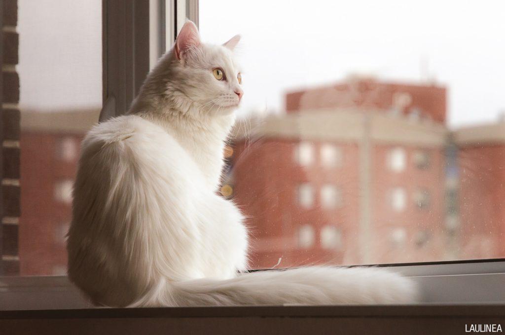 chat, yéti, blanc, cat