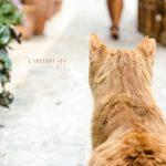 photo du mois, instant T , chat, cassis