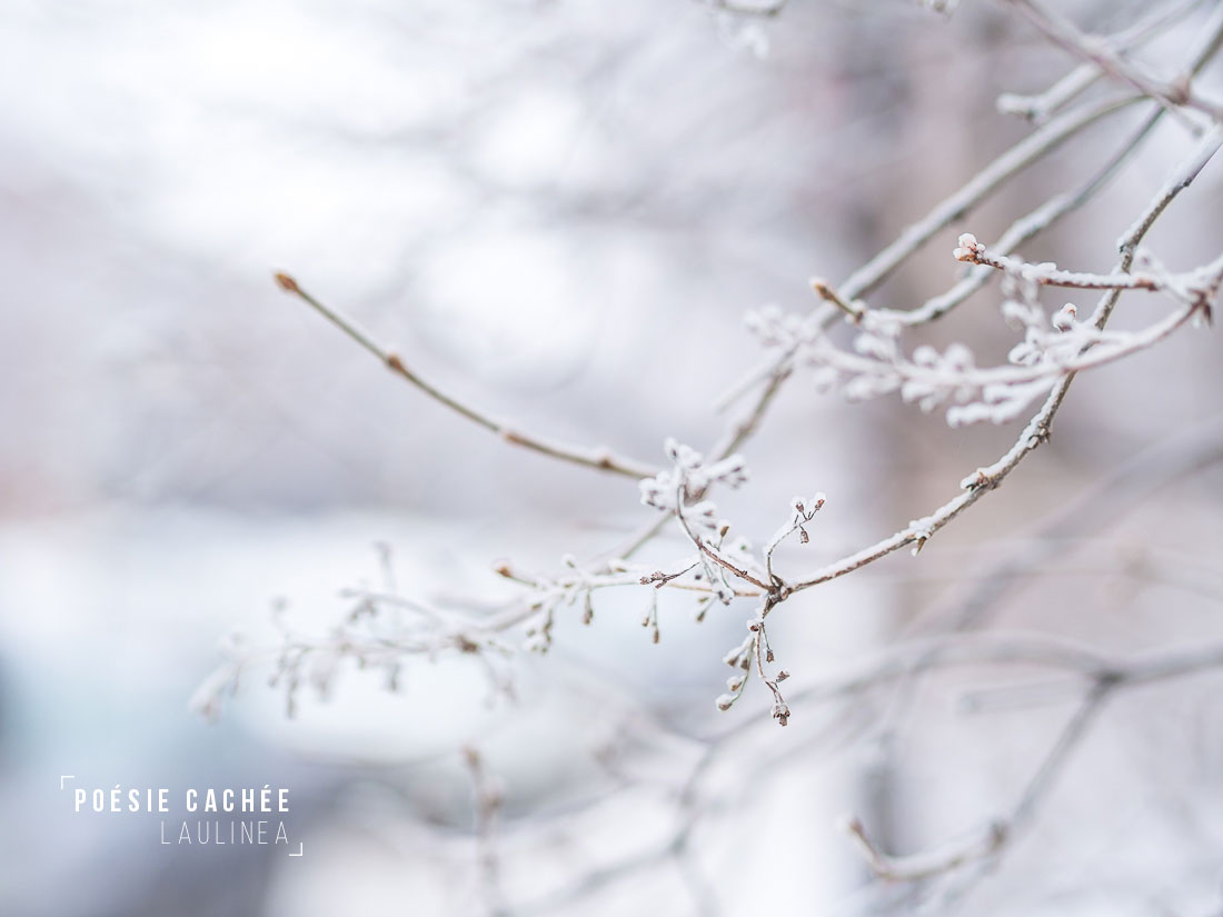 poésie, nature, hiver, winter, cold, white, froid, montreal